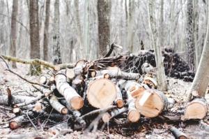 brennholz im wald sammeln